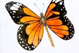 蝴蝶水彩图片手绘教程 蝴蝶水彩怎么画 蝴蝶水彩画法