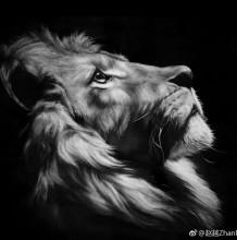 逼真精美的狮子头像素描图片 狮子手绘教程画法 孤独的王者