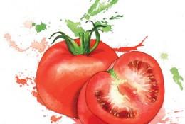 蔬果水彩画图片 常见蔬菜水果的水彩画手绘教程 蔬菜水果水彩画法