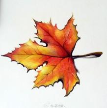秋天红枫叶的彩铅画教程 枫叶手绘步骤图片 枫叶怎么画 枫叶的画法