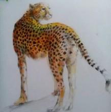 豹子的画法 豹子彩铅画手绘教程图片 花豹彩铅怎么画
