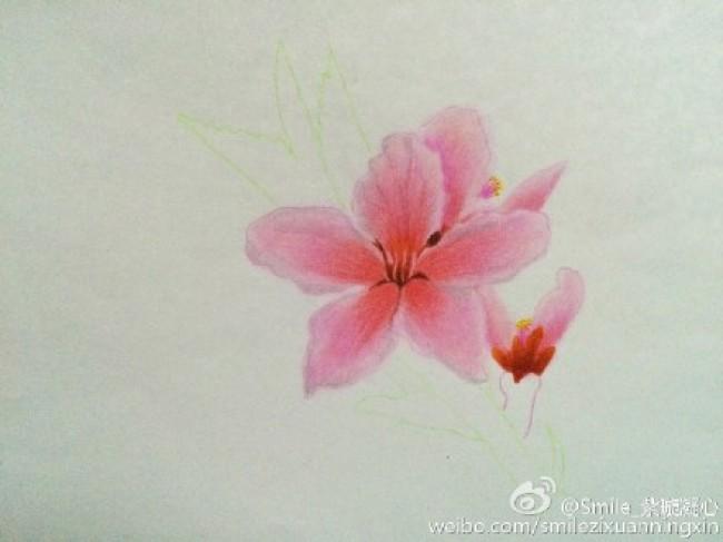 桃花彩铅画手绘教程图片 桃花的画法 桃花怎么画