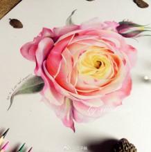 月季花彩铅画教程图片 月季花手绘教程图片 月季花怎么画 月季花画法