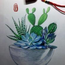 仙人掌多肉植物马克笔手绘教程图片 多肉植物马克笔上色怎么画 画法教程
