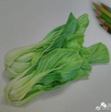 两颗逼真的大白菜彩铅画图片 青菜彩铅手绘教程 白菜的画法 白菜怎么画