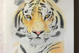 百兽之王老虎彩铅画图片 兽王老虎怎么画 老虎的画法
