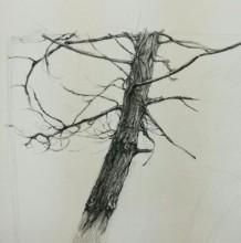一棵枯树素描画图片 枯树干素描画手绘教程 枯树干怎么画 画法