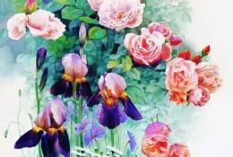 精湛的玫瑰画水彩画图片 黄有维作品
