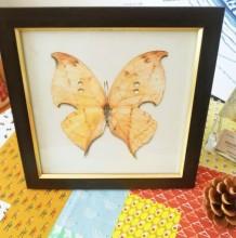 蝴蝶标本彩铅画图片 蝴蝶标本彩铅手绘教程 蝴蝶怎么画 蝴蝶的画法