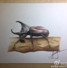 甲虫独角仙彩铅画图片 独角仙彩铅手绘教 独角仙怎么画 独角仙画法