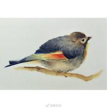 红嘴相思鸟水彩画图片 红嘴相思鸟水彩手绘教程 红嘴相思鸟怎么画 画法