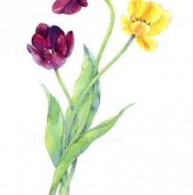 郁金香水彩画图片 郁金香水彩手绘教程 郁金香的水彩画法 郁金香怎么画