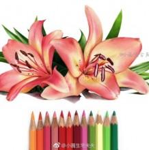 百合花彩铅图片 百合花彩铅手绘教程 百合花怎么画 百合花的画法