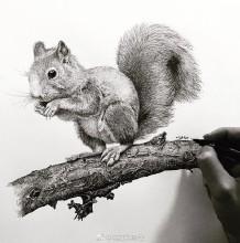 优秀针管笔动物插画手绘作品 针管笔动物系列作品图片