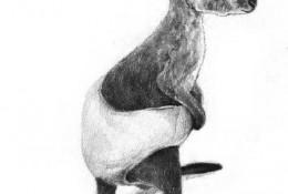 可爱的袋鼠宝宝素描画图片 袋鼠素描手绘教程 袋鼠的画法