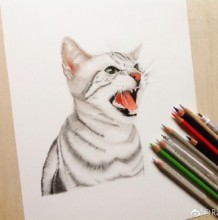 英国短毛猫彩铅画图片 英短猫彩铅手绘教程 英短猫怎么画画法