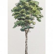 常见立体树木钢笔水彩画图片素材马克笔上色也可以 效果图必备