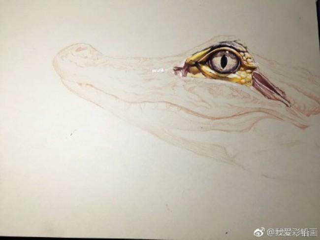 然后就可以逐步的进行彩铅的上色了.从嘴部开始,当然眼睛是特写.