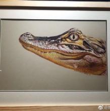 超逼真的鳄鱼彩铅写实画图片 立体逼真的鳄鱼彩铅手绘教程 逼真的鳄鱼怎么画