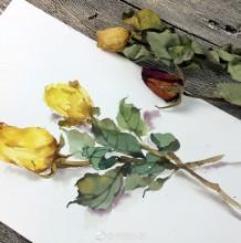 枯萎凋谢的玫瑰花水彩画图片 凋谢的玫瑰花卉手绘教程画法