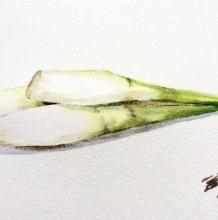 蔬菜茭白水彩画图片 茭白水彩怎么画 茭白的画法 茭白手绘教程
