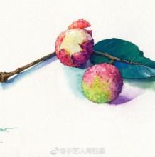 荔枝水彩画图片 荔枝水彩怎么画 有实物照片对比 真实逼真画法