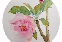 海棠花水彩画图片 海棠花手绘教程图片 海棠花的画法 海棠花怎么画