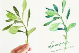 嫩叶植物水彩入门教程 简单画绿叶水彩画手绘教程画法