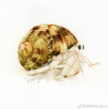 螃蟹水彩画图片 寄居蟹水彩画的画法 寄居蟹怎么画