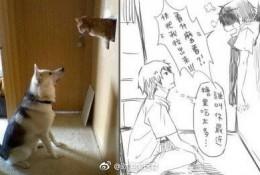 将狗狗和猫咪变成帅哥在一起会发生什么?创意插画图片