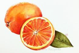 唯美多汁的水果橙子水彩手绘视频教程 夏季清新水彩绘