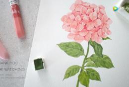 水彩绣球花手绘教程 粉色绣球花水彩画法过程