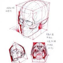 想画好头像你得先搞懂头骨结构 懂的了结构和比例透视还怕不会吗