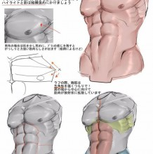 常听说男人6快腹肌 真的是6块吗?画人物不可避免的腹部结构