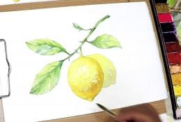 【视频】清新的柠檬水彩手绘视频教程 带枝叶唯美清新画法