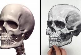 【视频】人头像素描基础 骷髅头像视频绘画教学 教你画人物头部骨骼结构