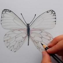 【视频】很简单的蝴蝶彩铅手绘视频教程 蝴蝶的画法 简单的蝴蝶怎么画