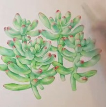 【视频】多个多肉植物一起的水彩手绘视频教程 可爱多肉的画法视频
