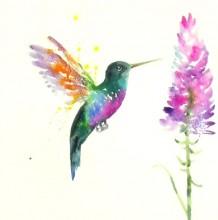 【视频】多彩的蜂鸟水彩手绘视频教程 好看的蜂鸟与花朵水彩画法教程