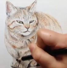 【视频】非常慵懒可爱的浅色猫咪彩铅画手绘视频教程 简单的猫咪画法