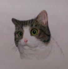 【视频】瞪着眼睛超可爱网红猫咪彩铅画手绘视频教程 喵星人彩铅画图片