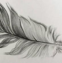 【视频】一根黑色的羽毛素描画手绘视频教程 教你画羽毛的铅笔画