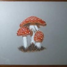 【视频】几颗可爱的小蘑菇超写实手绘视频教程 彩铅+马克笔+水彩完美表现