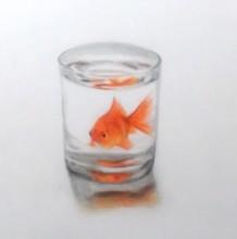 【视频】杯子里的金鱼素描彩铅画手绘视频教程 玻璃质感很不错
