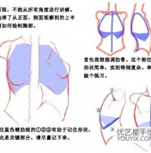 教你怎么才能画好女生的胸部 女生胸部结构和画法 动漫女生的胸部绘画教学