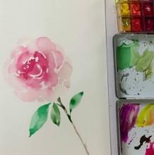 【视频】清新淡雅的一朵水彩玫瑰花手绘视频教程 新手简单玫瑰花单枝画法