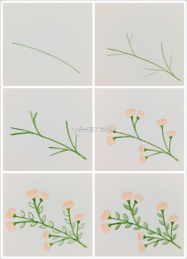 简单彩铅植物简笔画教程 小清新植物简单彩铅画素材图片