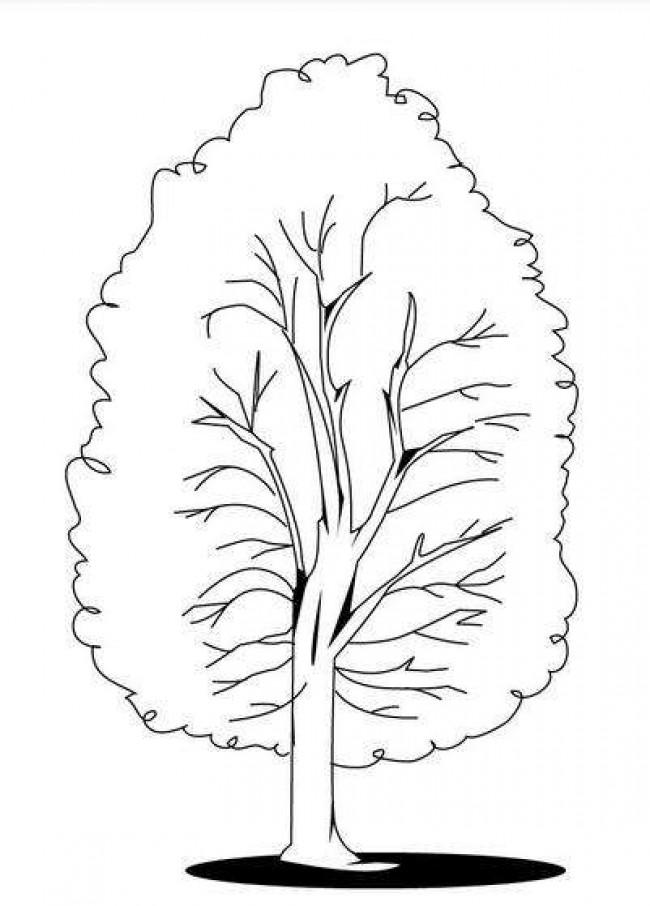 树木杨树简笔画怎么画 杨树卡通画儿童画画法 杨树的画法