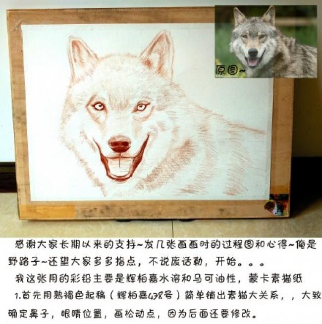 孤独的狼彩铅画手绘教程图片 狼的画法 狼用彩铅怎么画