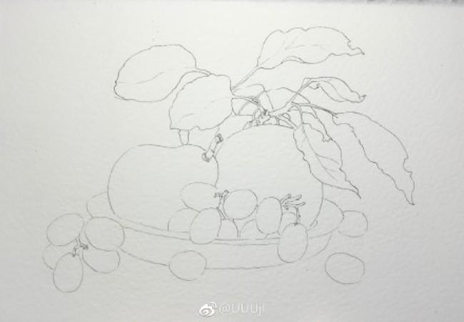 李子和葡萄的水彩画画法图片